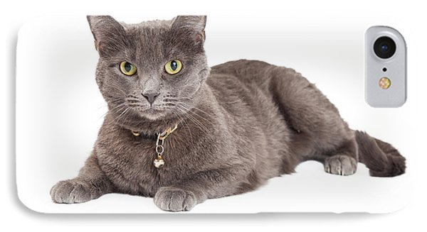 Beautiful Grey Domestic Shorthair Cat Laying IPhone Case