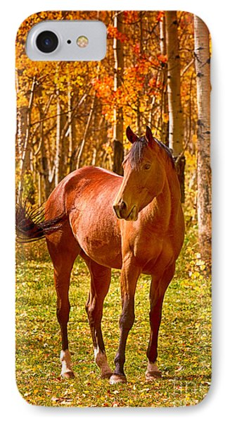Beautiful Horse In The Autumn Aspen Colors Phone Case by James BO  Insogna
