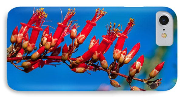 Beautiful Ocotillo IPhone Case by Robert Bales