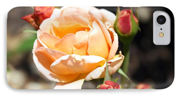 IPhone Case featuring the photograph Beautiful Peach Orange Rose by Ellen Tully