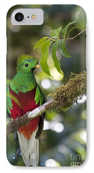 Beautiful Quetzal 1 Phone Case by Heiko Koehrer-Wagner