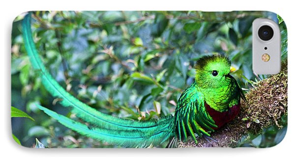 Beautiful Quetzal 3 IPhone Case by Heiko Koehrer-Wagner