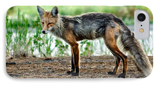 Beautiful Red Fox IPhone Case by Robert Bales