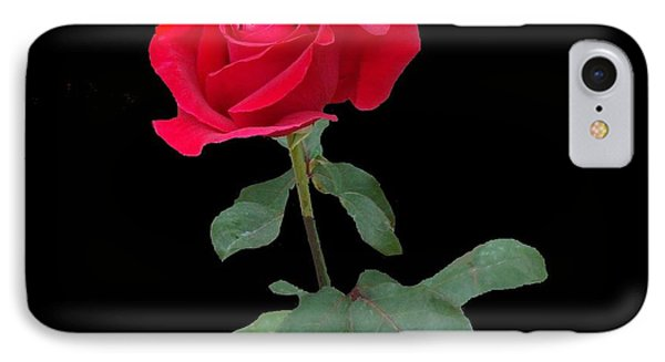 Beautiful Red Rose IPhone Case