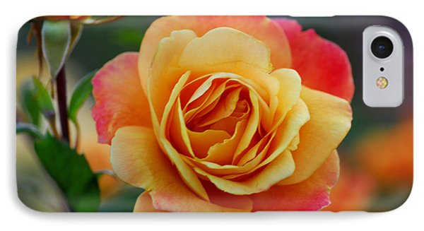 Beautiful Roses IPhone Case by Jean-Jacques Thebault