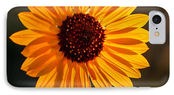 Beautiful Sunflower IPhone Case