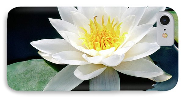Beautiful Water Lily Capture IPhone Case by Ed  Riche