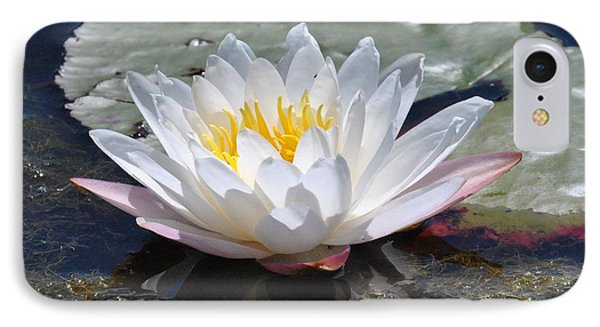 IPhone Case featuring the photograph Beautiful Water Lily by Michele Kaiser