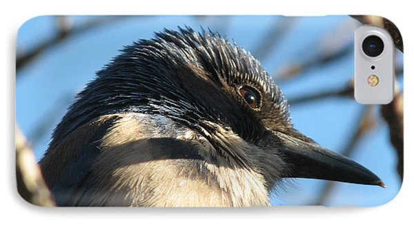 Beautiful Western Scrub Jay IPhone Case