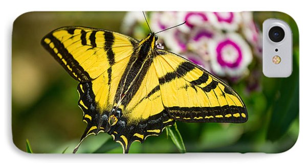 Beautiful Western Tiger Swallowtail Butterfly On Spring Flowers. Phone Case by Jamie Pham