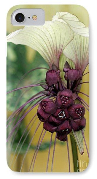 Beautiful White Bat Flower Phone Case by Sabrina L Ryan