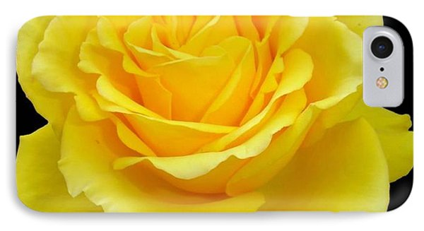 Beautiful Yellow Rose Flower On Black Background  IPhone Case by Tracey Harrington-Simpson