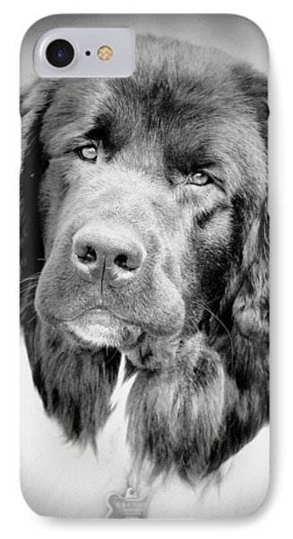 IPhone Case featuring the photograph Beauty Pup by Barbara Dudley