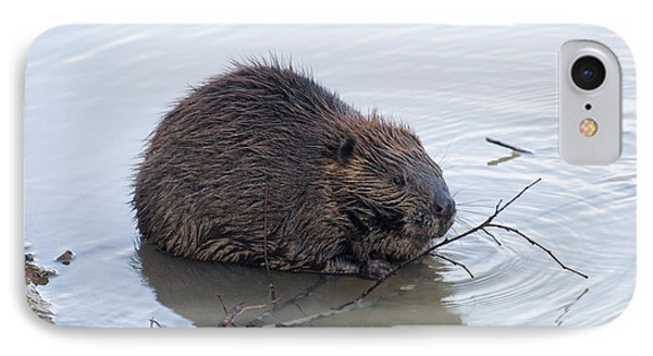 Beaver Chewing On Twig IPhone 7 Case by Chris Flees
