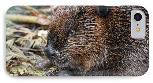 IPhone Case featuring the photograph Beaver Eating by Peggy Collins