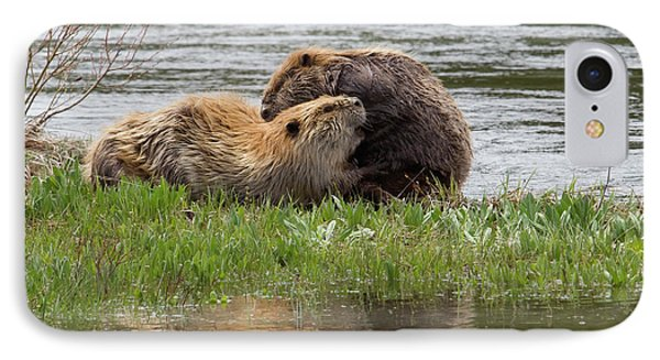 Beaver Pair Grooming One Another IPhone 7 Case by Ken Archer