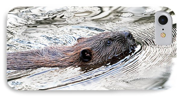 IPhone Case featuring the photograph Beaver Swimming In A Pond by Peggy Collins