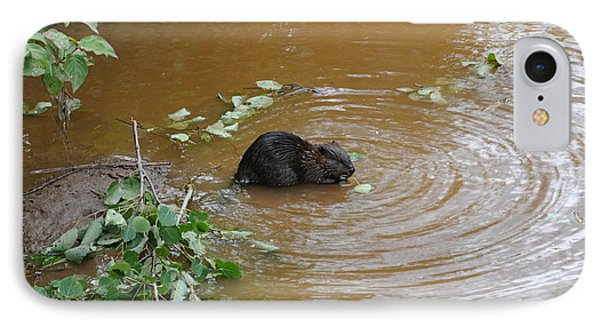 Beaver Youngster At Lunch Phone Case by Sandra Updyke