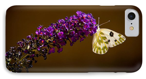 IPhone Case featuring the photograph Beckers On Butterfly Bush Sparks Nevada by Janis Knight