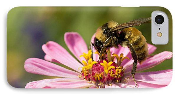 Bee At Work IPhone Case by Greg Graham