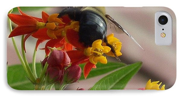 IPhone Case featuring the photograph Bee Close Up by Cleaster Cotton