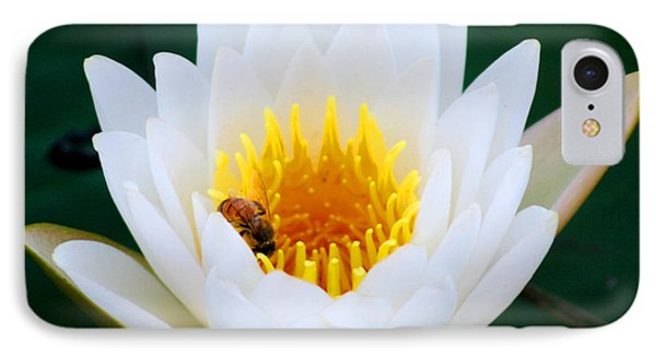 Bee In A Lily  IPhone Case by Marty Gayler