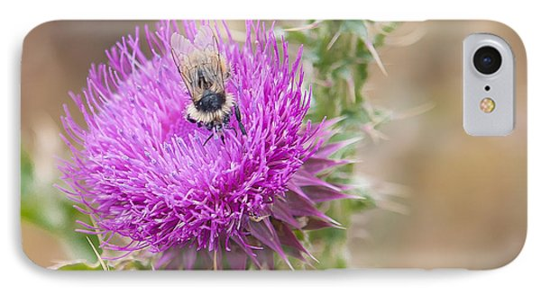 Bee On A Thistle Flower IPhone Case by Todd Soderstrom
