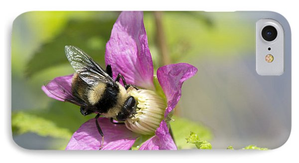 Bee On Flower IPhone Case by Michele Wright