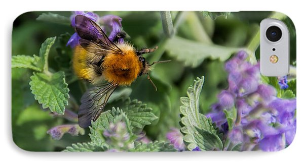 IPhone Case featuring the photograph Bee Too by David Gleeson