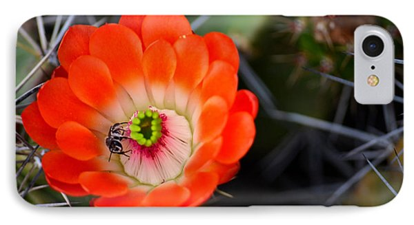 Bee Ware The Thorns Phone Case by Deb Halloran