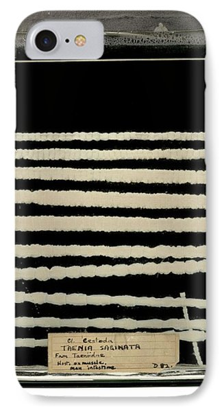 Beef Tapeworm Specimen IPhone Case
