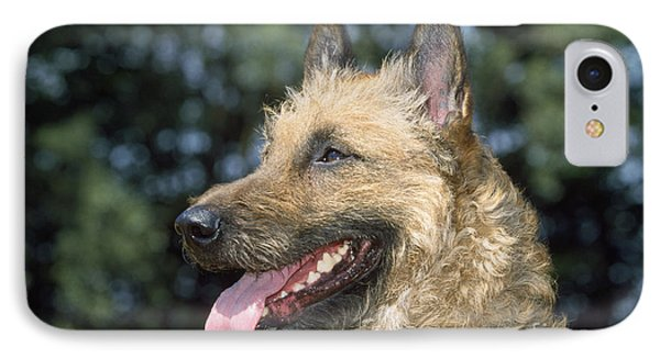 Belgian Laekenois Dog IPhone Case by Johan De Meester