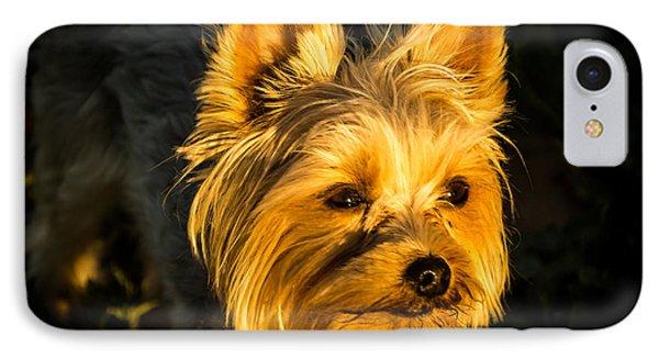 Bella The Wonder Dog IPhone Case by Jay Stockhaus