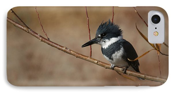 Belted Kingfisher IPhone Case by Ernie Echols