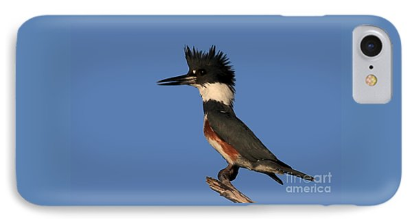 Belted Kingfisher IPhone Case by Meg Rousher