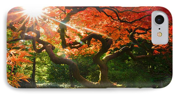 Bending Toward The Light IPhone Case by Don Schwartz