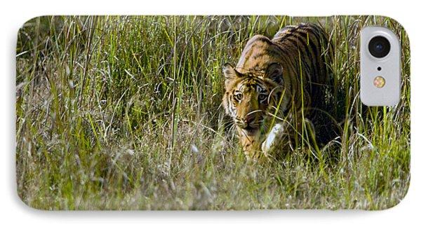 Bengal Tiger Panthera Tigris Tigris Cub IPhone Case