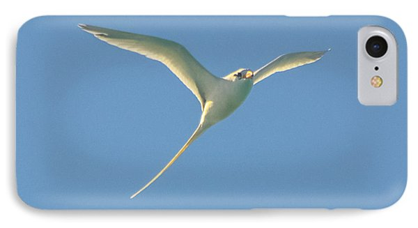 Bermuda Longtail In Flight IPhone Case by Jeff at JSJ Photography