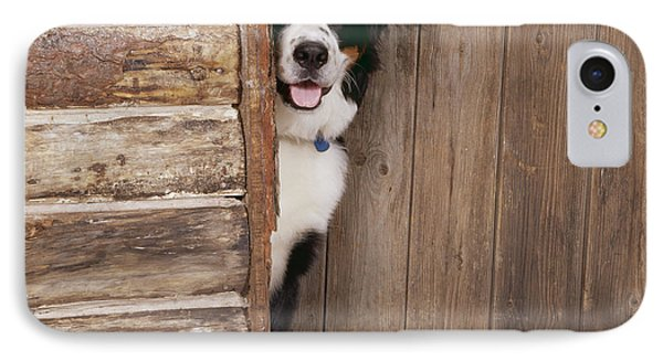Bernese Mountain Dog At Log Cabin Door Phone Case by John Daniels