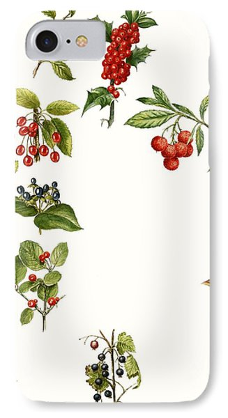 Berries IPhone Case by English School