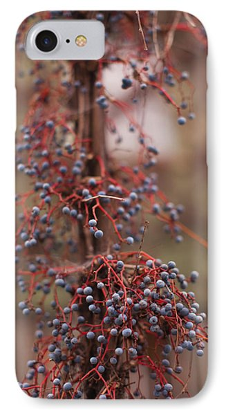 Berries On A Tree, Healdsburg, Russian IPhone Case by Panoramic Images
