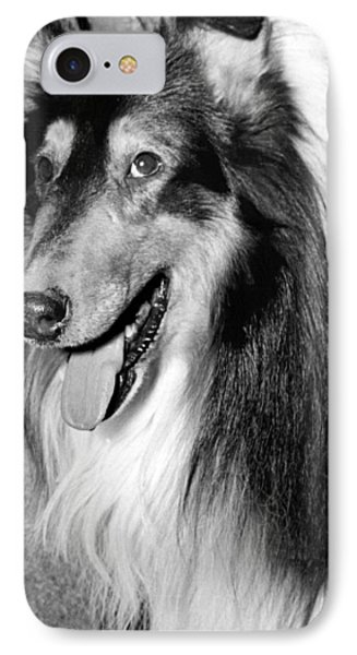 Best Of Breed Collie IPhone Case by Underwood Archives