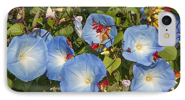 Bhubing Palace Gardens Morning Glory Dthcm0433 IPhone Case by Gerry Gantt