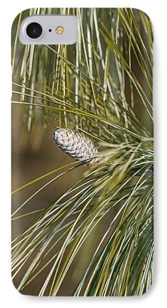 Bhutan Pine (pinus Wallichiana) IPhone Case by Dr. Nick Kurzenko