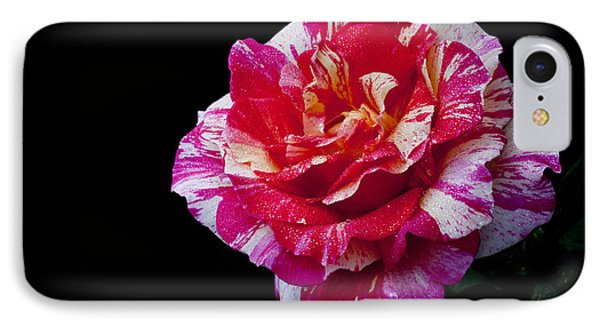 IPhone Case featuring the photograph Bicolour Beauty by Doug Norkum