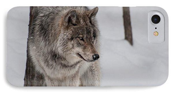 Big Bad Wolf IPhone Case by Bianca Nadeau