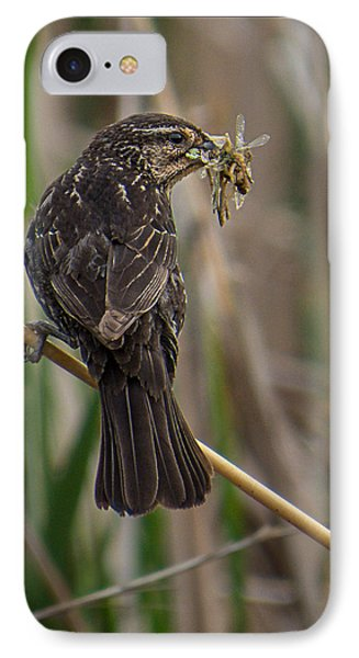 IPhone Case featuring the photograph Big Dinner For Female Red Winged Blackbird II by Patti Deters