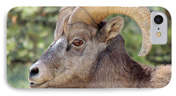 Big Horn IPhone Case by Lynn Sprowl