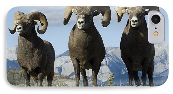 Big Horn Sheep IPhone Case