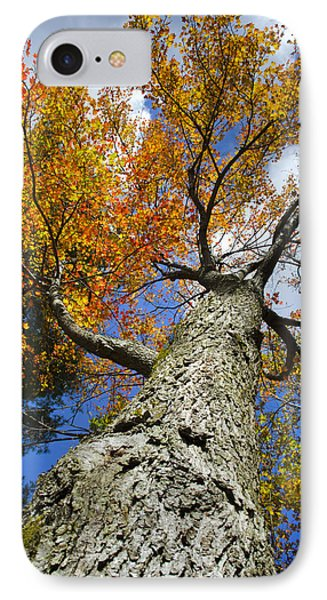 Big Orange Maple Tree Phone Case by Christina Rollo